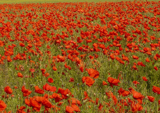 Contact Martins Memorials if you want to take part in a Remembrance Sunday event.