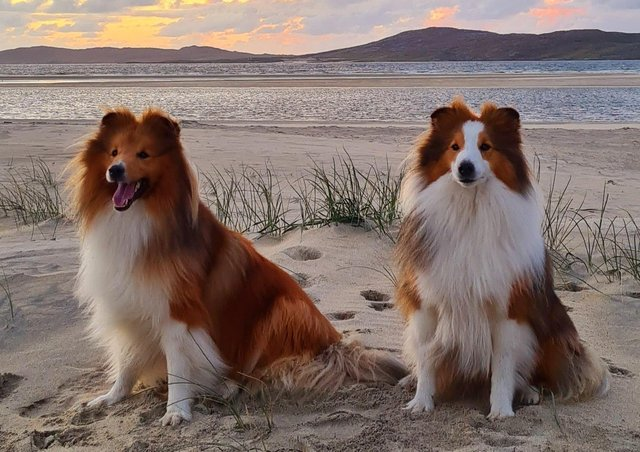 Flash and Blaze on Seilebost Beach by Alison Prentice Reader's Pic