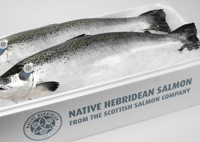 Advertising image from the Scottish Salmon Company