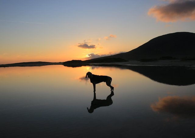 Zac the Weimaraner by Rob Livingstone Readers' Pics
