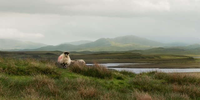 The Crofting Commission regulates all crofting land, including common grazing. Pic: John MacKinnon