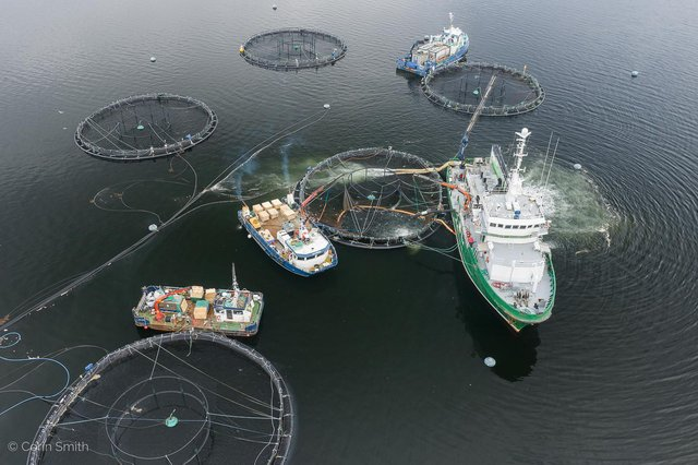 Open water salmon farming cages