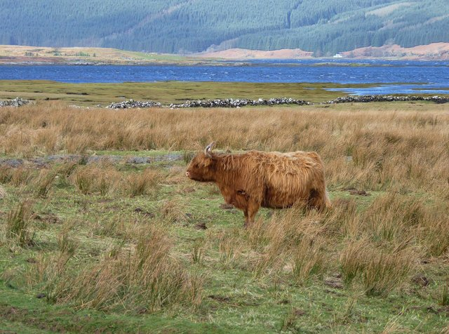 Low-impact management practices, commonplace throughout the crofting areas, helps promote and maintain biodiversity