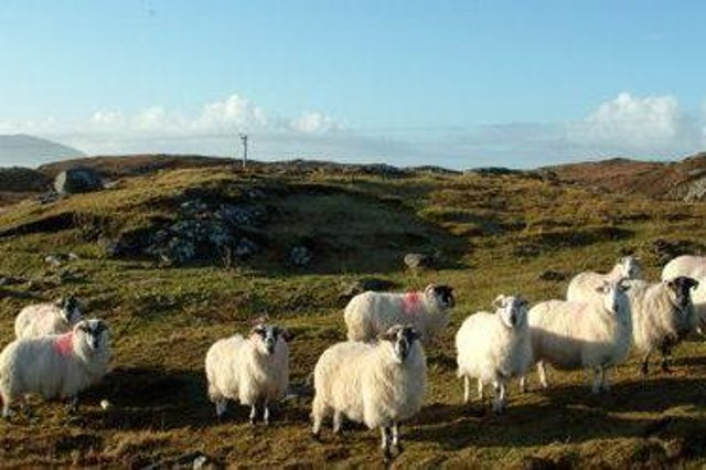 Report examines how crofters can be helped